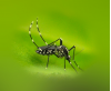 County Warns SCV Residents to Prevent West Nile Virus
