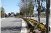 Valencia Boulevard Median Refurbishment Project Under Construction