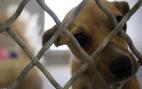 Newsom Signs Wilk Hemp Bill, Vetoes Doggie Donor Blood Bill