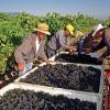 CDFA, CARB Advance Reduced-Carbon Farming