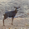 September 18-24: Watch Out for Wildlife Week
