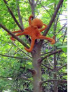 Save the Tree Octopus | Commentary by Dianne Erskine Hellrigel