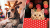 Tips to Keep Pets Safe from Holiday Hazards