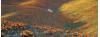 Antelope Valley California Poppy Reserve Seeking Seasonal Park Aide