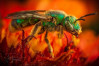'A Peek into the Curious World of Insects' Buzzes into Valencia Library