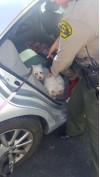 Deputies Break Window, Rescue Dogs Locked in Car