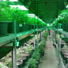 Small Pot Farmers Seek Protection from Corporate Growers in California
