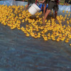 October 14: 15th Annual Rubber Ducky Festival for Sam Dixon Centers