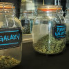 Cannabis Officials Offer Job Tips for Aspiring Budtenders
