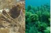 CSUN Professor Examines Coral Reef Damage Left by Hurricanes