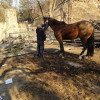 County Animal Care Responds to Horse Deaths in Sylmar