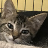 Cat-Napped Kitten Returned Safely to Shelter Hope