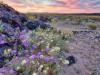 Lawsuit Challenges Trump Administration OK of Cadiz Plan to Drain Desert Aquifer