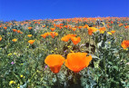 Poppy Reserve Hiring Seasonal Park Aides