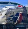 Princess Cruises Reunites Family with Stowaway Pet Bird