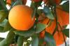 March 24: CSUN Gardening Class; Growing Fruit Trees