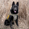 LASD 'Safe Streets' K9s to Get Protective Vests