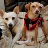 Senate to Vote on Wilk Animal Cruelty, Violence Intervention Act