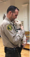 SCV Deputy Duxbury's Tips: Comfort Pets Are Not Service Animals