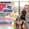 May 25-27: Pet Adoption Fees at County Shelters Waived for Veterans