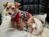 State Senate Unanimously Passes Wilk Animal Abuse Measure