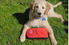 County Animal Care Recommends Pet Disaster Kits for Home, Travel