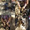 Animal Rescue Group Seeks Help for German Shepherd Puppies