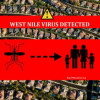 First West Nile Positive Mosquitoes Found – Panorama City