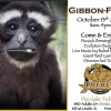Oct. 13: Gibbon-Fest at Gibbon Conservation Center