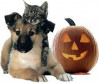 County Offers Halloween Pet Safety Tips