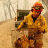 County Shelters Caring for Animal Victims of Woolsey Fire