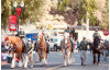 CHP Commissioners to Participate in Rose Parade