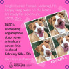 County to Offer Discounted Adoptions as Valentine's Gift for Dog Lovers