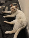 Feline Rescued by Animal Care & Control Needs Forever Home