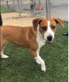 Puppy in Recent Animal Cruelty Case Still Available for Adoption