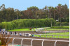 Barger Motion Adds Support for Ending Horse Fatalities at Santa Anita Park