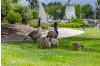 Guardians of Geese at Bridgeport Urge Caution