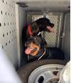Dogs Left in Hot Van Rescued by SCV Deputies