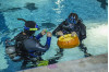 City Hosts 11th Annual Underwater Pumpkin Carving Contest