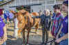 Straightening Reins Holds Grand Opening for New Facility