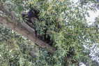 Sheriff's 'Out of the Ordinary' Call: Bear Arm Found on Creekside Road