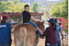 Carousel Ranch Suspends Services; Requesting Donations