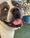 You'll Be Way Safer-At-Home If You Adopt Butch