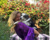DACC Reunites Stolen Dog with Its Humans in San Francisco