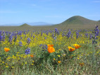 Trump Administration OK's Drilling in California's Largest Grassland