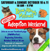 Oct. 10-11: Bow-Wows & Meows Virtual Adoption Weekend