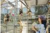 Gibbon Conservation Center Leaving the SCV