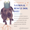 Animal Care & Control Reminding Community About National Rescue Dog Day