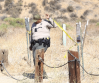 Coroner Identifies Body Found Near Castaic Lake