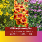SCV Water's Upcoming Virtual Gardening Class to Highlight SCV's Top 30 Plants for Landscaping
